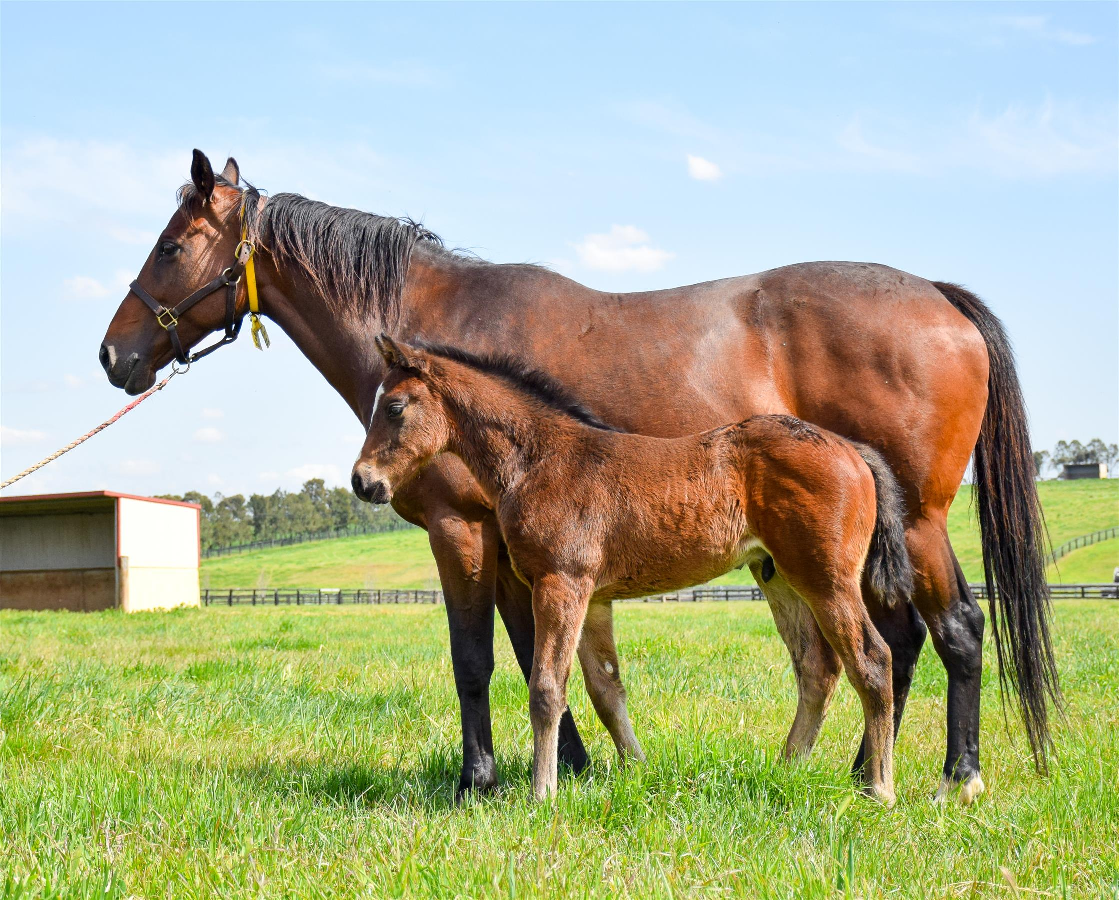 '19 colt out of Tree of Jesse