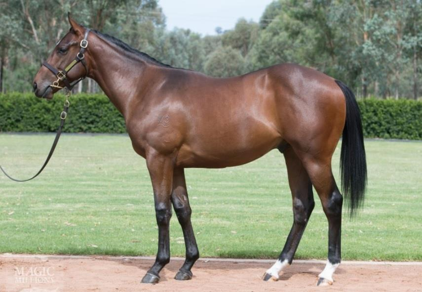 Reggae 16 - purchased by Orbis Bloodstock for $675,000 at Magic Millions